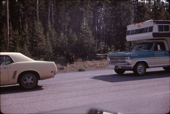1971 Yellowstone bear and camper