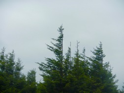 Three-sided spruce