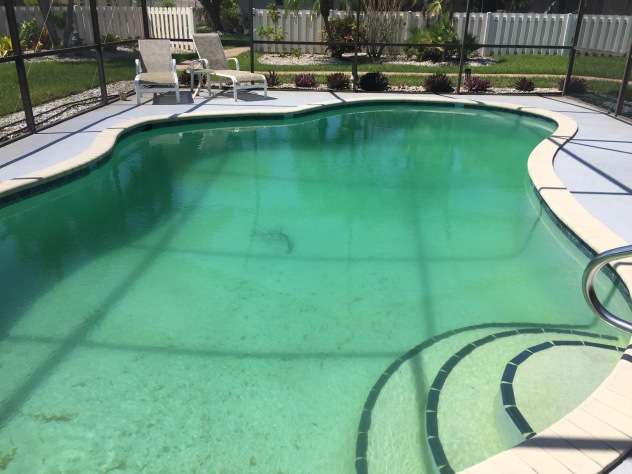 A mystery palm frond appeared in the pool...even though the cage was completely intact. A good Irma mystery.