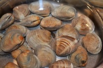 Soaking clams