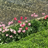 Flowers against the lake