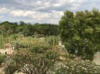 Oaxaca countryside garden