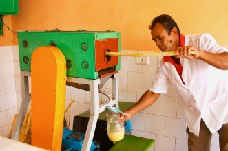 Extracting cane juice. Photo by Panther