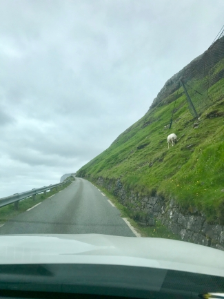 Exciting driving, and sheep all around, too.